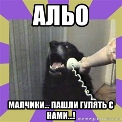 Yes, this is dog! - альо малчики... пашли гулять с нами...!
