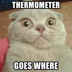 GEEZUS cat - THERMOMETER  GOES WHERE
