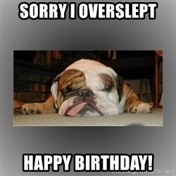 English Bulldog - sorry i overslept happy birthday!