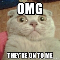 GEEZUS cat - OMG THEY'RE ON TO ME