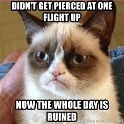 Tard's cat - Didn't get pierced at one flight up now the whole day is ruined