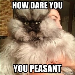Colonel Meow - how dare you you peasant
