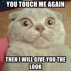 GEEZUS cat - YOU TOUCH ME AGAIN  THEN I WILL GIVE YOU THE LOOK