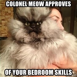 Colonel Meow - colonel meow approves of your bedroom skills