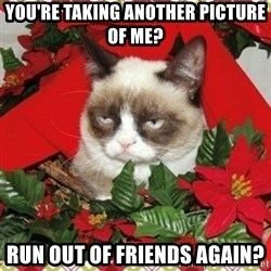 Grumpy Christmas Cat - you're taking another picture of me? run out of friends again?