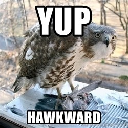 Hawkward - Yup Hawkward