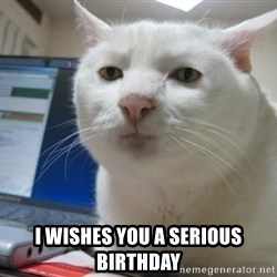Serious Cat - I wishes you a serious birthday