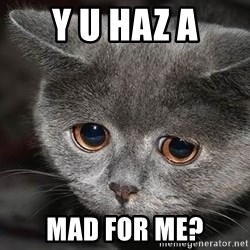 Sadcat - y u haz a mad for me?