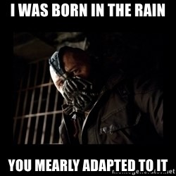 Bane Meme - I was born in the rain You mearLy adapted to it