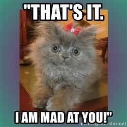 "cute cat - ""that's it.  I AM MAD AT YOU!"""