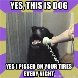 Yes, this is dog! - yes, this is dog yes i pissed on your tires every night