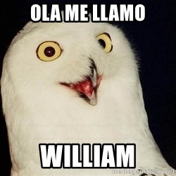 O Rly Owl - ola me llamo william