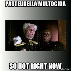 So hot right now - PASTEURELLA mULToCIDA sO hOT RIGHT NOW