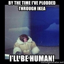 Darwin The ikea Monkey - by the time I've plodded through IKEA I'll be human!