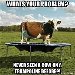 Unimpressionable Cow - Whats your problem? Never seen a cow on a trampoline before?!