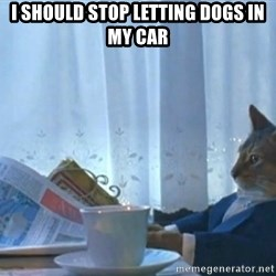 Sophisticated Cat - I should stop LettIng dogs in my car