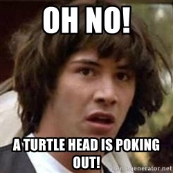 Conspiracy Keanu - OH NO! A turtle head is poking out!