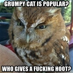 Overly Angry Owl - GRUMPY cAT IS POPULAR? wHO GIVES A FUCKING HOOT?
