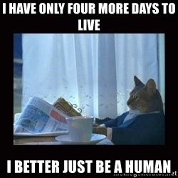 i should buy a boat cat - I HAVE ONLY FOUR MORE DAYS TO LIVE I BETTER JUST BE A HUMAN