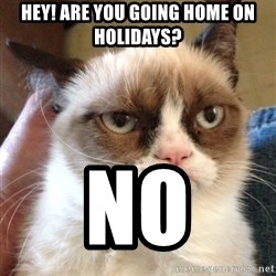 Mr angry cat - Hey! Are you going home on holidays? no