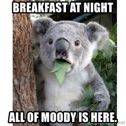 surprised koala - breakfast at night all of moody is here.