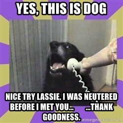 Yes, this is dog! - Yes, this is dog Nice try lassie. i was neutered before I met you...        ...thank goodness.