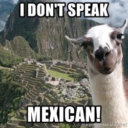 Bossy the Llama - I don't speak Mexican!