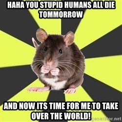 Survivor Rat - haha you stupid humans all die tommorrow and now its time for me to take over the world!