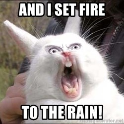 Rabbit On Alert - AnD I SET FIRE TO THE RAIN!