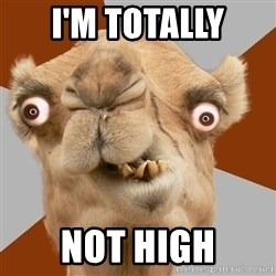 Crazy Camel lol - I'M TOTALLY NOT HIGH