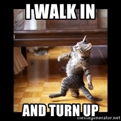 cat swag - I walk in And turn up
