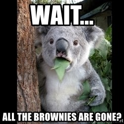 Koala can't believe it - Wait... all the brownies are gone?