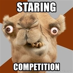 Crazy Camel lol - STARING COMPETITION