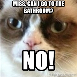 angry cat asshole - Miss, can I go to the bathroom? NO!