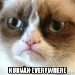 angry cat asshole - Kurvàk everywhere