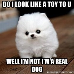 more meat for my duck - DO I LOOK LIKE A TOY TO U WELL I'M NOT I'M A REAL DOG