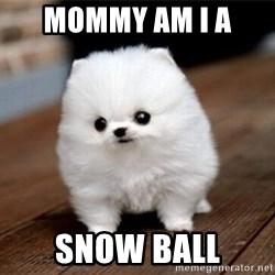 more meat for my duck - MOMMY AM I A  SNOW BALL