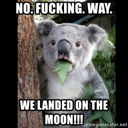 Koala can't believe it - NO. FUCKING. WAY. WE LANDED ON THE MOON!!!