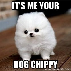 more meat for my duck - IT'S ME YOUR DOG CHIPPY
