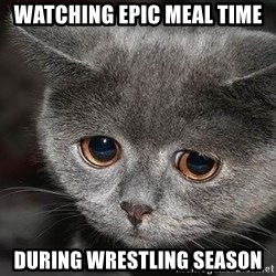 Sadcat - watching epic meal time DURING wrestling season