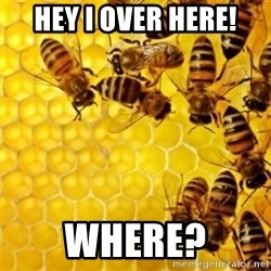 Honeybees - HEY I OVER HERE! WHERE?