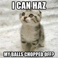 Can haz cat - I can haz my balls chopped off?