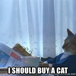 Suit cat - I should buy a cat