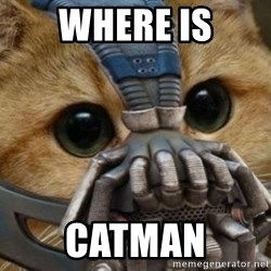 bane cat - WHERE IS CATMAN