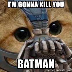 bane cat - I'M GONNA KILL YOU BATMAN