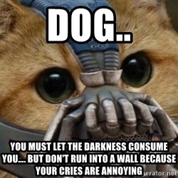 bane cat - DOG.. YOU MUST LET THE DARKNESS CONSUME YOU.... BUT DON'T RUN INTO A WALL BECAUSE YOUR CRIES ARE ANNOYING