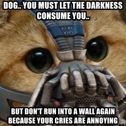bane cat - DOG.. YOU MUST LET THE DARKNESS CONSUME YOU.. BUT DON'T RUN INTO A WALL AGAIN BECAUSE YOUR CRIES ARE ANNOYING