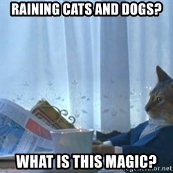 newspaper cat realization - raining cats and dogs? What is this magic?