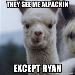 alpaca - TheY SEE ME ALPACKIN Except Ryan