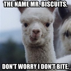 alpaca - The name Mr. Biscuits, don't worry i don't bite.